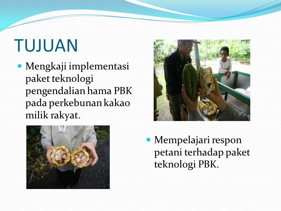 TUJUAN Mengkaji implementasi paket teknologi pengendalian hama PBK pada perkebunan kakao milik rakyat.