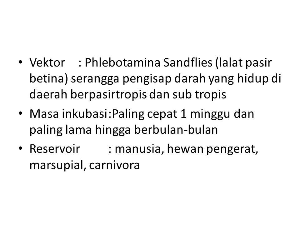 Vektor : Phlebotamina Sandflies (lalat pasir betina) serangga pengisap darah yang hidup di daerah berpasirtropis dan sub tropis