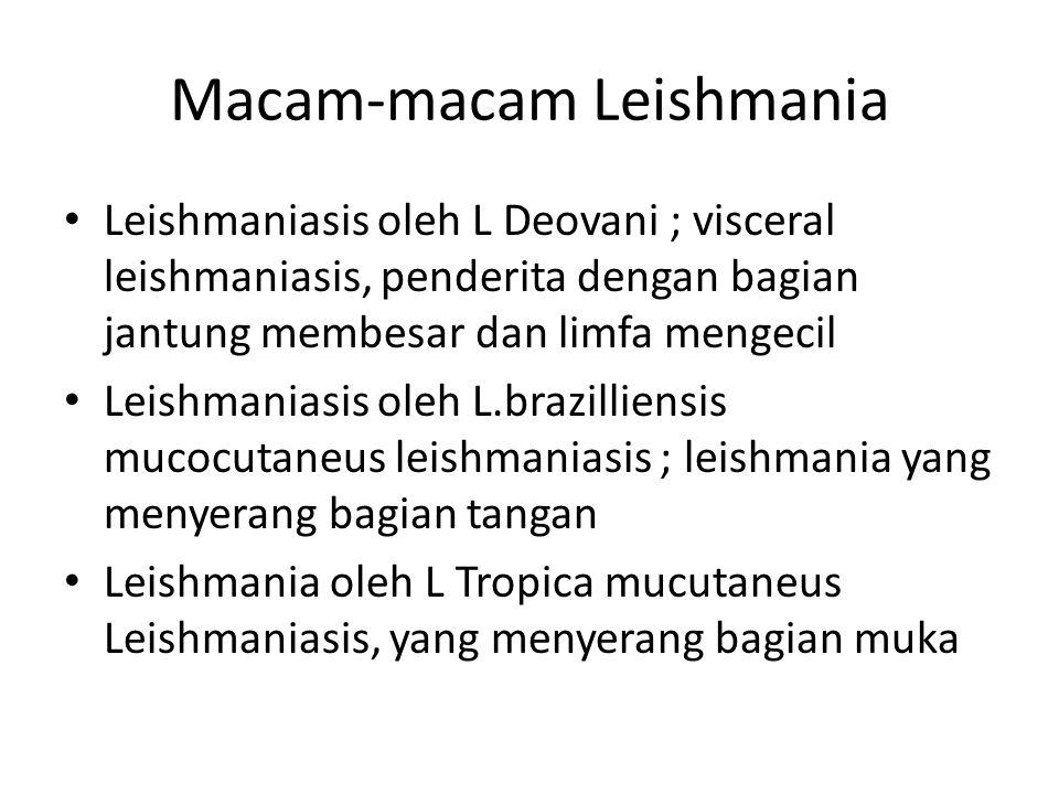 Macam-macam Leishmania