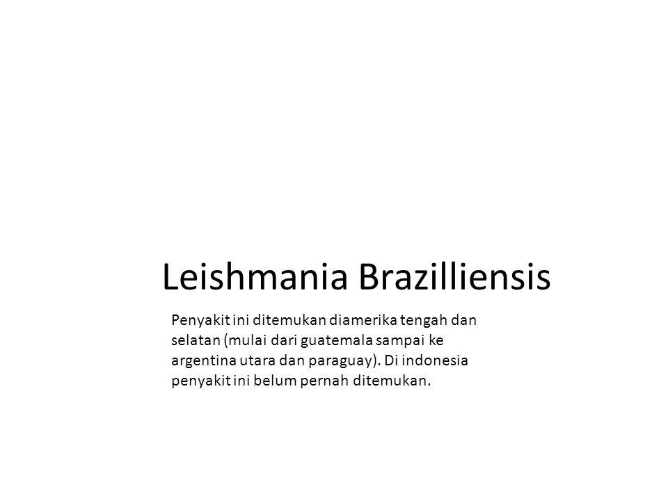 Leishmania Brazilliensis