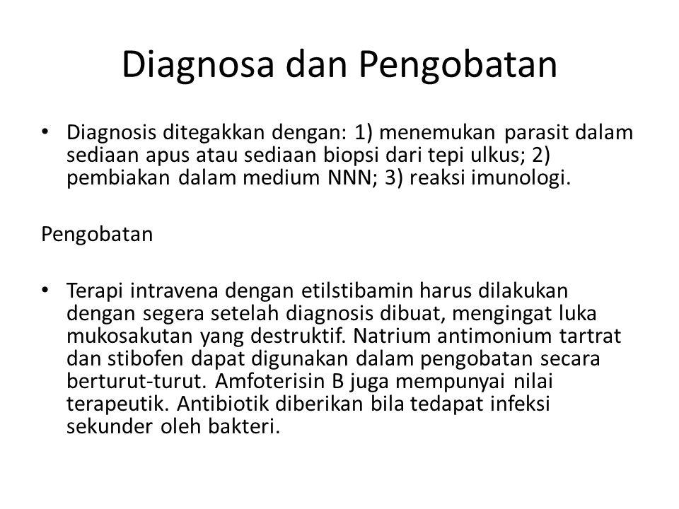 Diagnosa dan Pengobatan