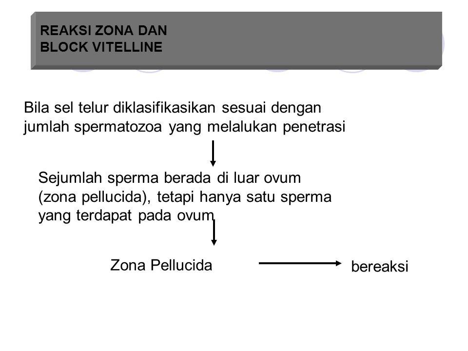 REAKSI ZONA DAN BLOCK VITELLINE