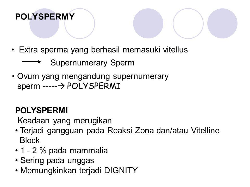 POLYSPERMY Extra sperma yang berhasil memasuki vitellus