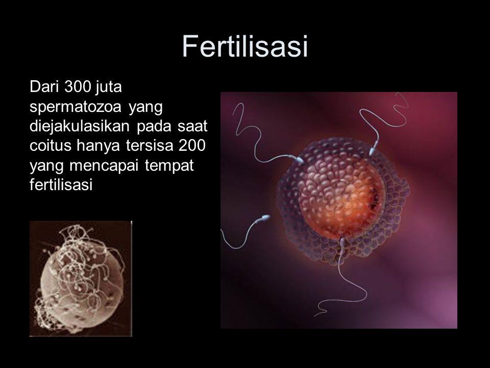 Fertilisasi Dari 300 juta spermatozoa yang diejakulasikan pada saat coitus hanya tersisa 200 yang mencapai tempat fertilisasi.