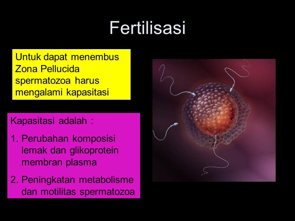 Fertilisasi Untuk dapat menembus Zona Pellucida spermatozoa harus mengalami kapasitasi. Kapasitasi adalah :