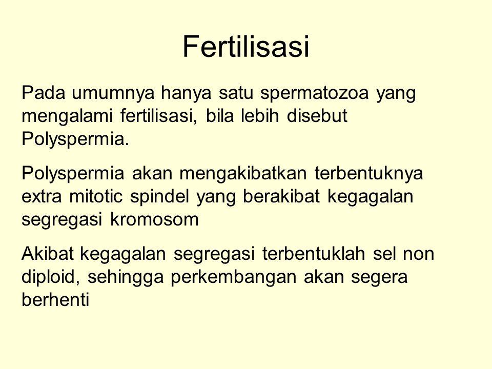 Fertilisasi Pada umumnya hanya satu spermatozoa yang mengalami fertilisasi, bila lebih disebut Polyspermia.