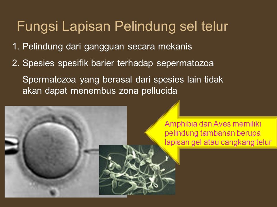 Fungsi Lapisan Pelindung sel telur