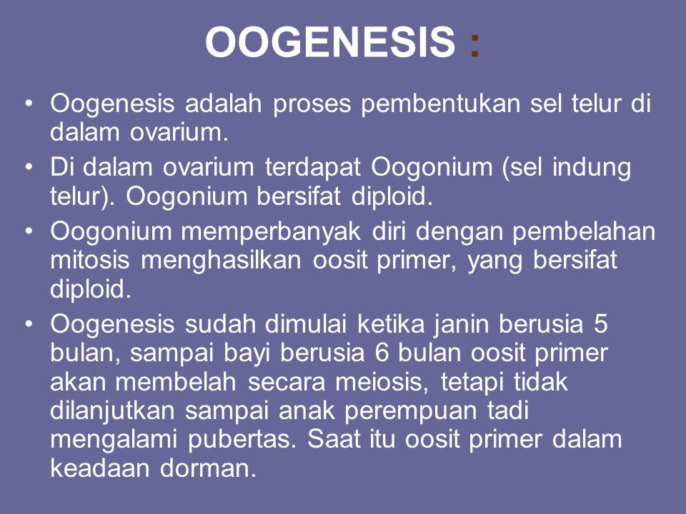 OOGENESIS : Oogenesis adalah proses pembentukan sel telur di dalam ovarium.