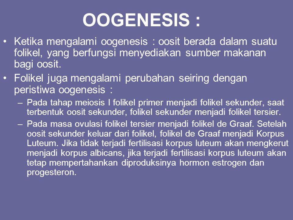 OOGENESIS : Ketika mengalami oogenesis : oosit berada dalam suatu folikel, yang berfungsi menyediakan sumber makanan bagi oosit.