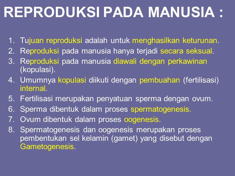 REPRODUKSI PADA MANUSIA :