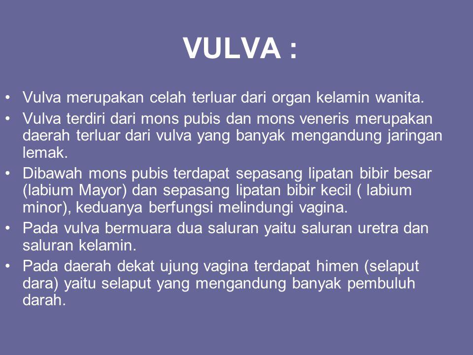 VULVA : Vulva merupakan celah terluar dari organ kelamin wanita.