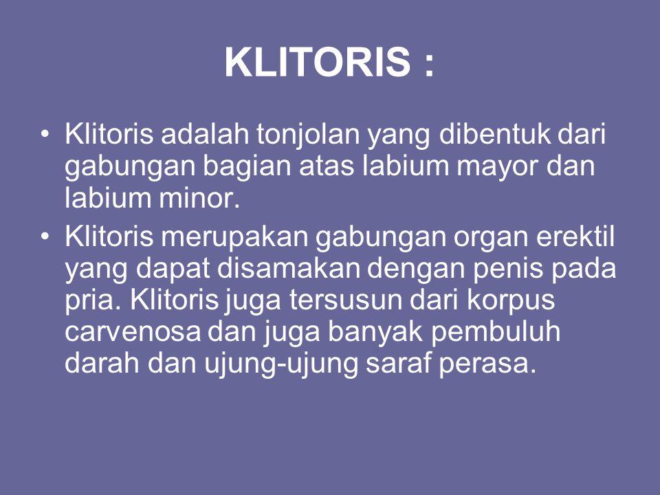KLITORIS : Klitoris adalah tonjolan yang dibentuk dari gabungan bagian atas labium mayor dan labium minor.
