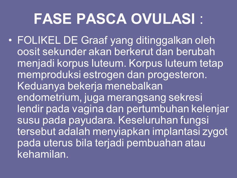 FASE PASCA OVULASI :