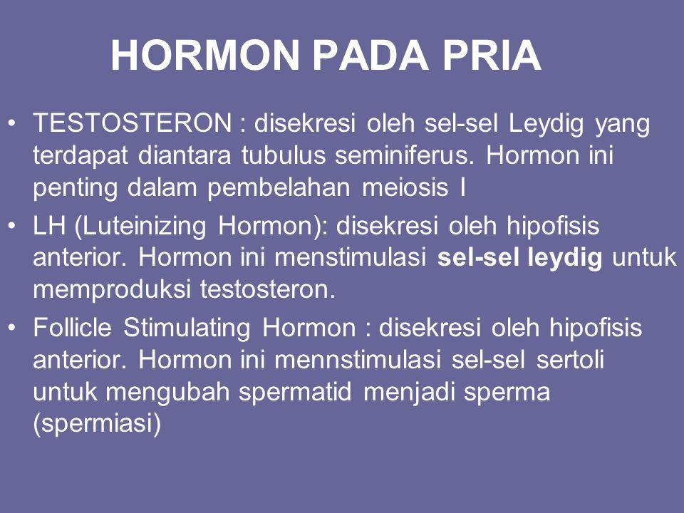 HORMON PADA PRIA