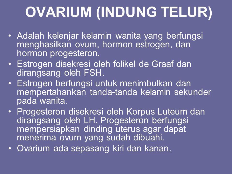 OVARIUM (INDUNG TELUR)