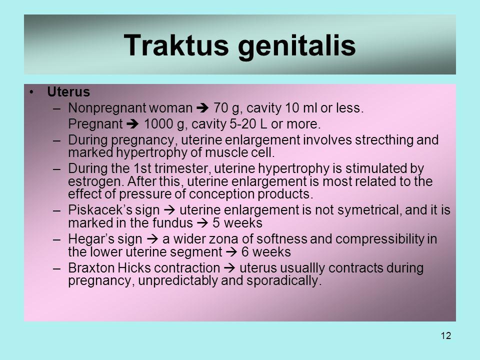 Traktus genitalis Uterus