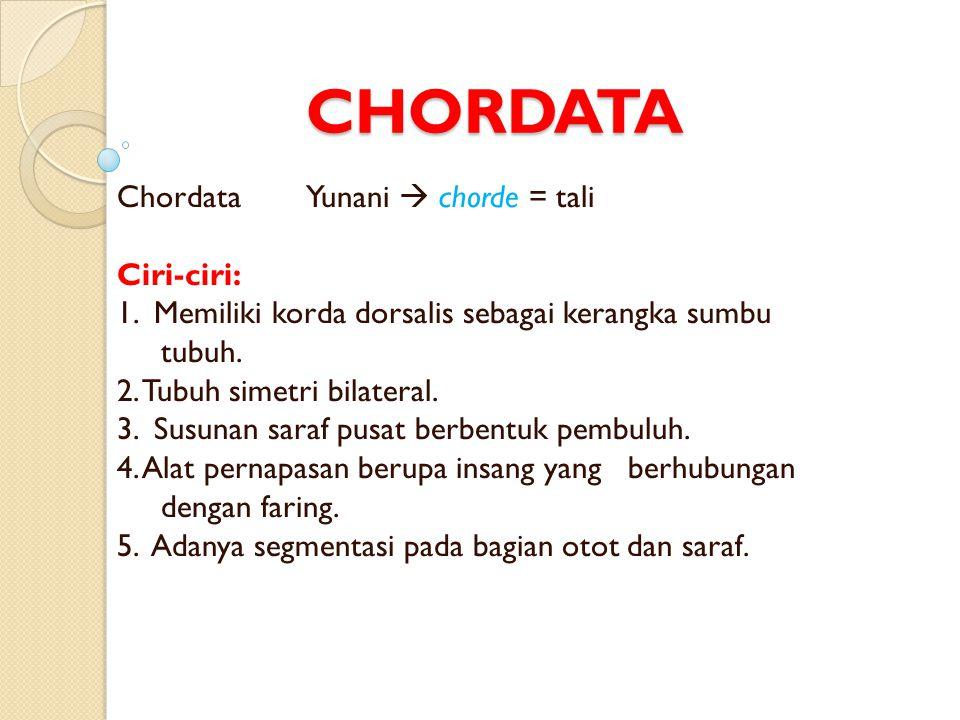 CHORDATA Chordata Yunani  chorde = tali Ciri-ciri: