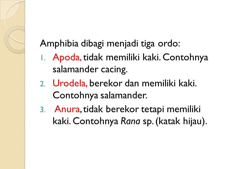Amphibia dibagi menjadi tiga ordo: