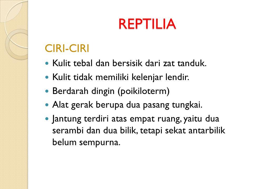 REPTILIA CIRI-CIRI Kulit tebal dan bersisik dari zat tanduk.