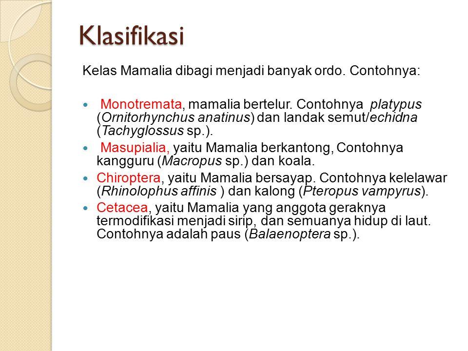 Klasifikasi Kelas Mamalia dibagi menjadi banyak ordo. Contohnya: