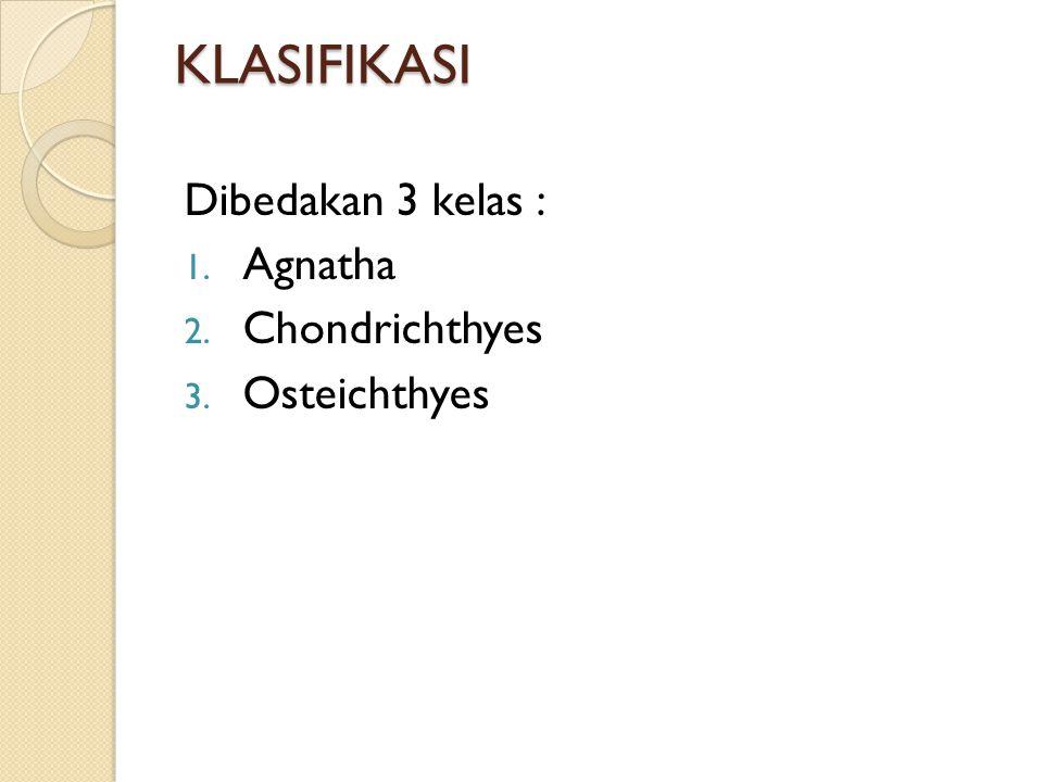 KLASIFIKASI Dibedakan 3 kelas : Agnatha Chondrichthyes Osteichthyes
