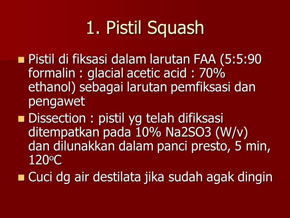 1. Pistil Squash Pistil di fiksasi dalam larutan FAA (5:5:90 formalin : glacial acetic acid : 70% ethanol) sebagai larutan pemfiksasi dan pengawet.