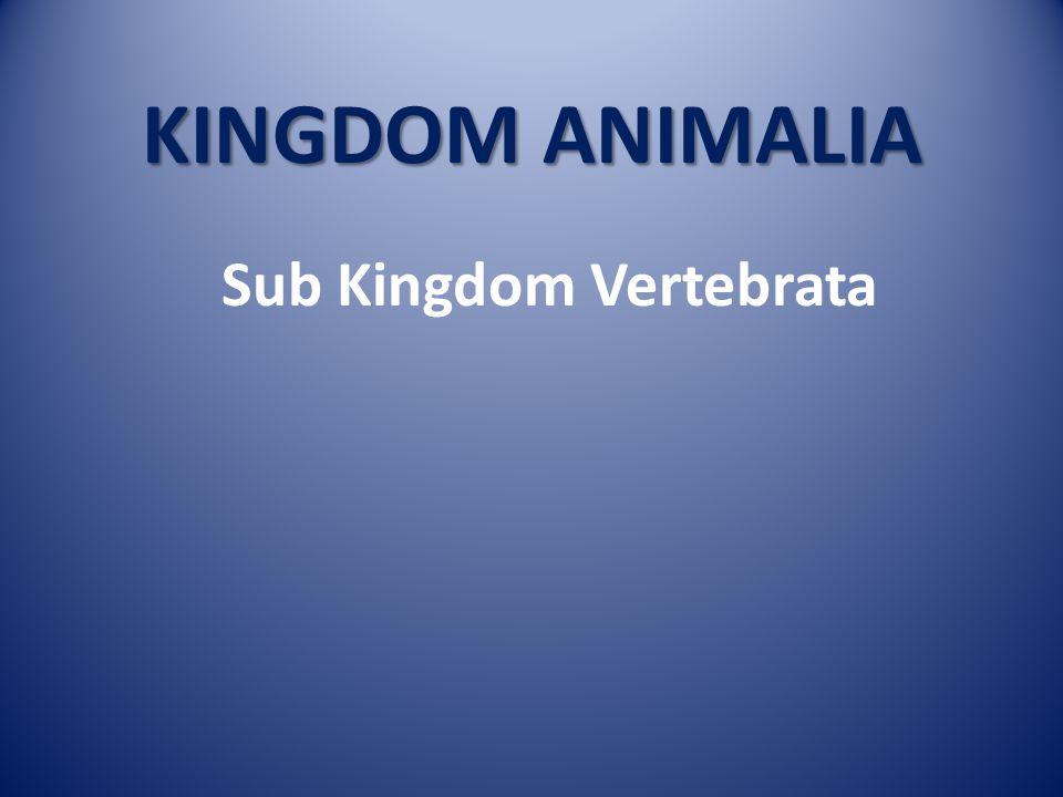 Sub Kingdom Vertebrata