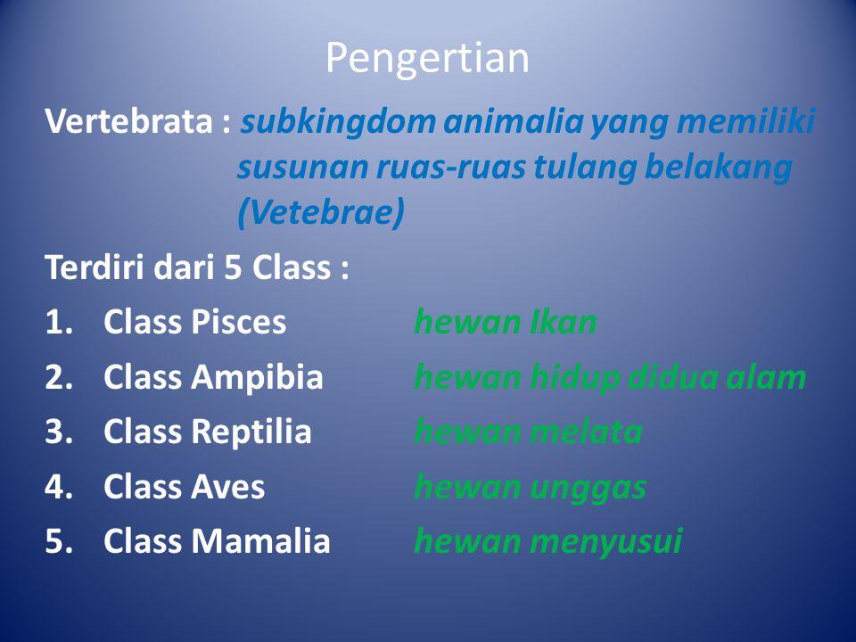 Pengertian Vertebrata : subkingdom animalia yang memiliki susunan ruas-ruas tulang belakang (Vetebrae)