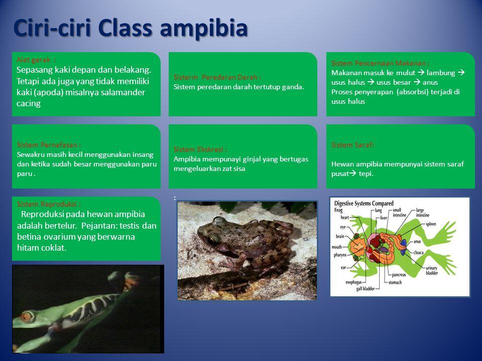 Ciri-ciri Class ampibia