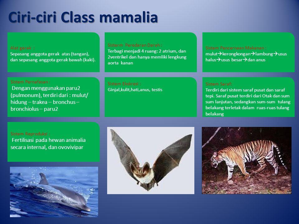 Ciri-ciri Class mamalia