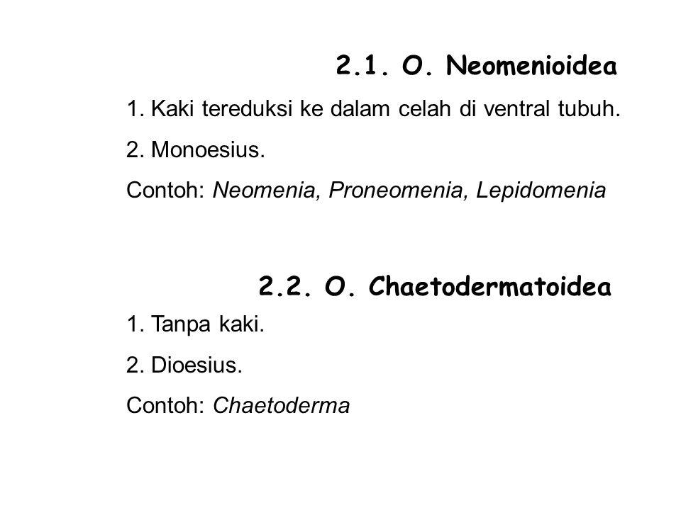 2.1. O. Neomenioidea 2.2. O. Chaetodermatoidea