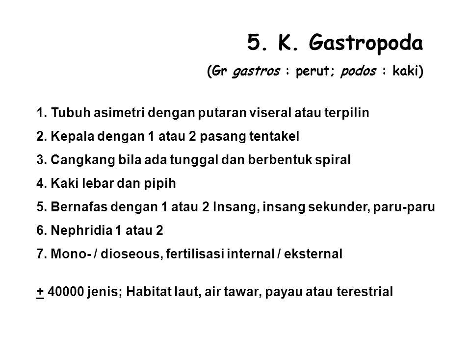 5. K. Gastropoda (Gr gastros : perut; podos : kaki)