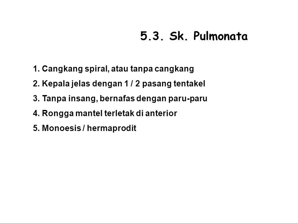 5.3. Sk. Pulmonata 1. Cangkang spiral, atau tanpa cangkang