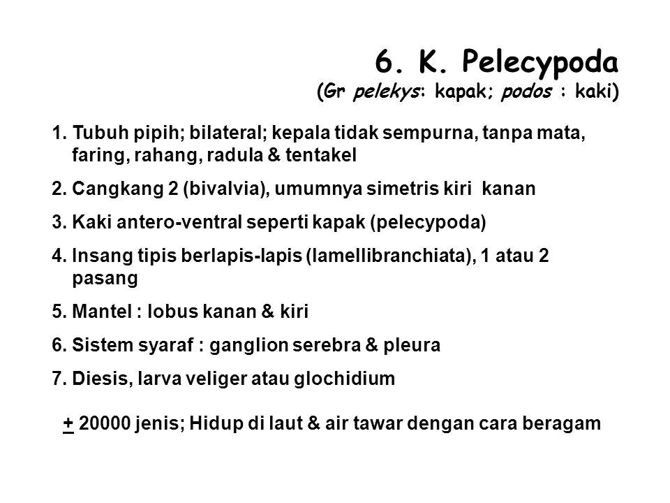 6. K. Pelecypoda (Gr pelekys: kapak; podos : kaki)