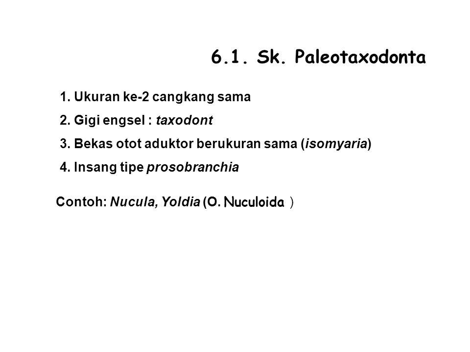 6.1. Sk. Paleotaxodonta 1. Ukuran ke-2 cangkang sama