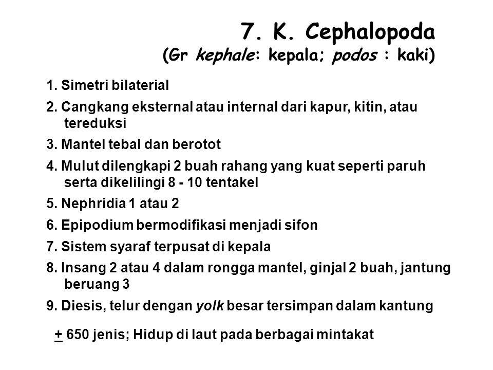 7. K. Cephalopoda (Gr kephale: kepala; podos : kaki)