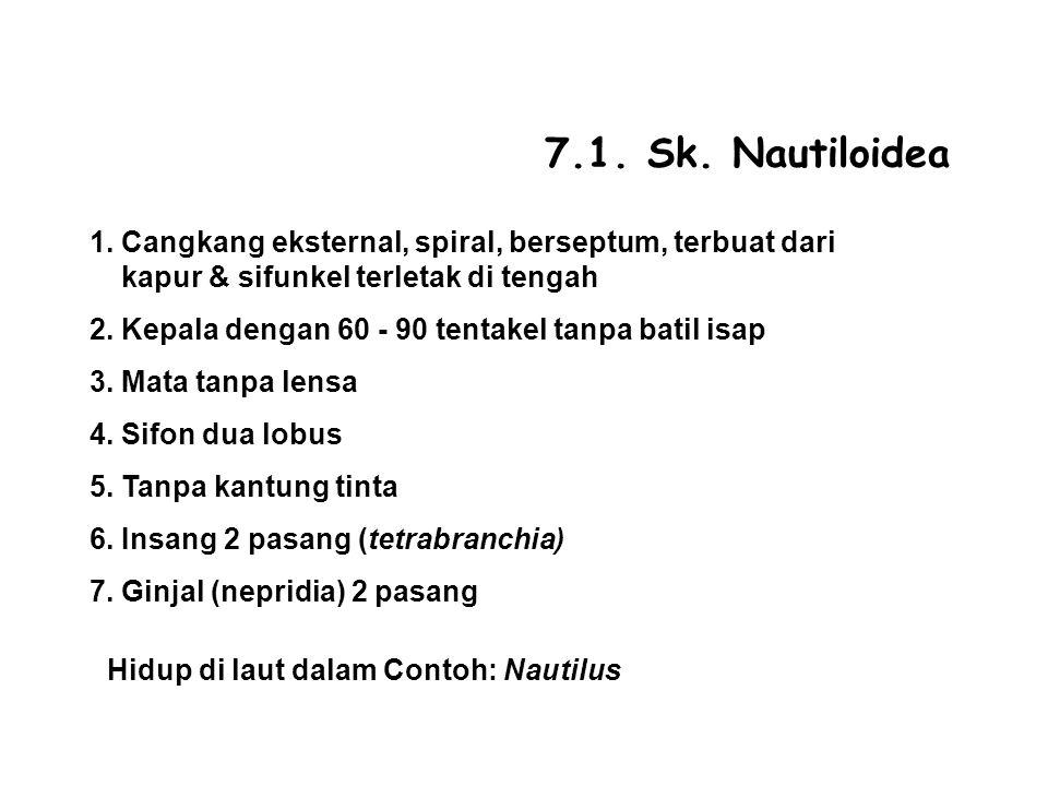 7.1. Sk. Nautiloidea 1. Cangkang eksternal, spiral, berseptum, terbuat dari kapur & sifunkel terletak di tengah.