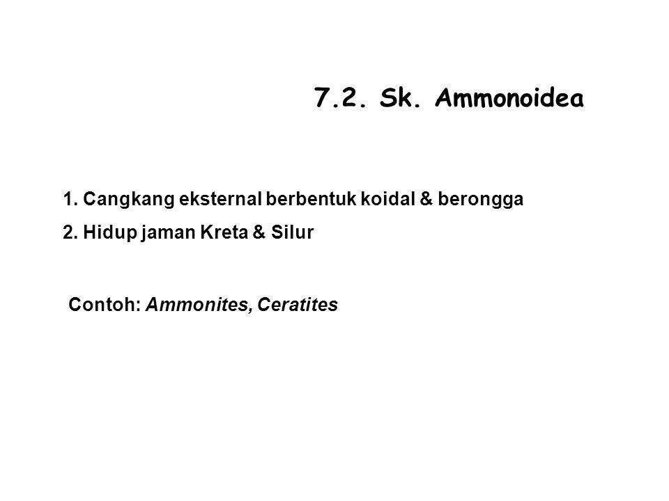 7.2. Sk. Ammonoidea 1. Cangkang eksternal berbentuk koidal & berongga