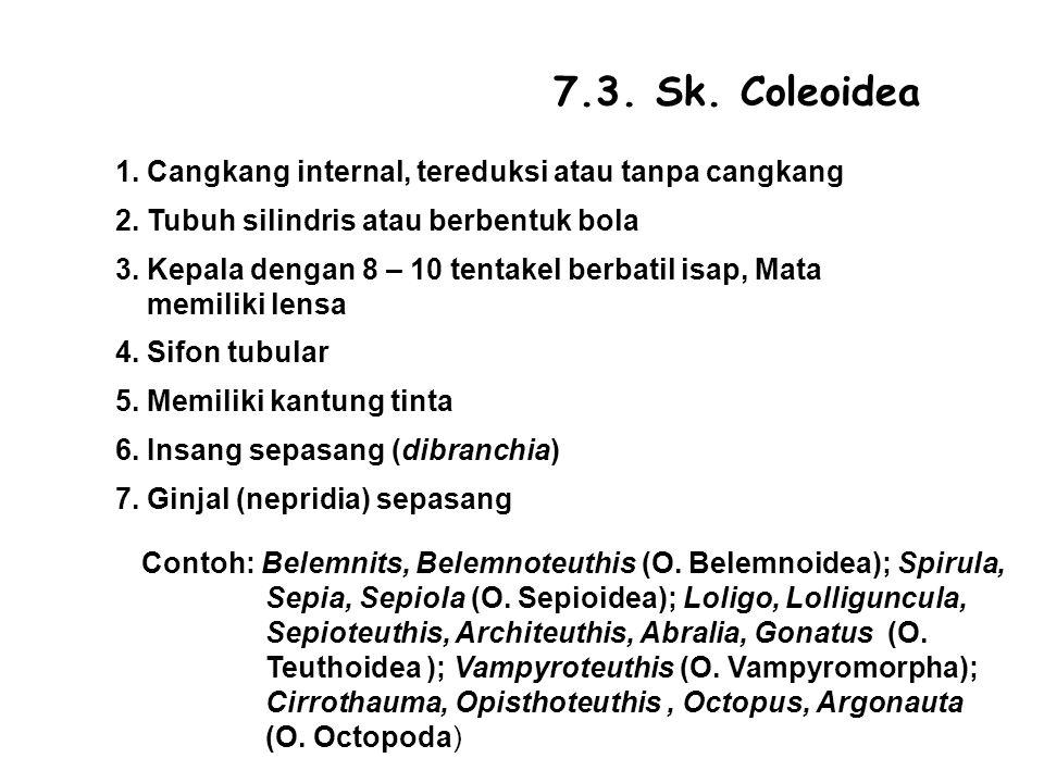 7.3. Sk. Coleoidea 1. Cangkang internal, tereduksi atau tanpa cangkang