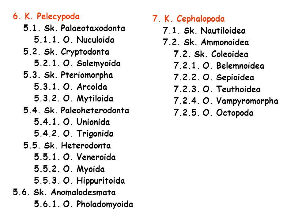 6. K. Pelecypoda 5.1. Sk. Palaeotaxodonta. 5.1.1. O. Nuculoida. 5.2. Sk. Cryptodonta. 5.2.1. O. Solemyoida.