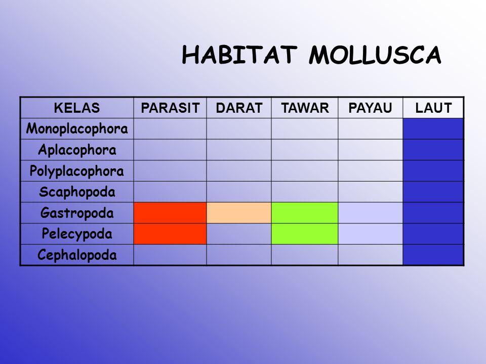 HABITAT MOLLUSCA KELAS PARASIT DARAT TAWAR PAYAU LAUT Monoplacophora