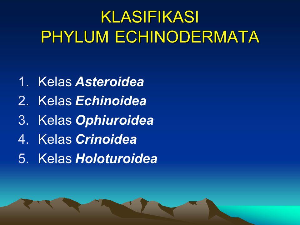 KLASIFIKASI PHYLUM ECHINODERMATA