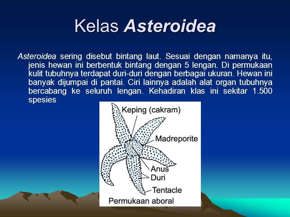 Kelas Asteroidea