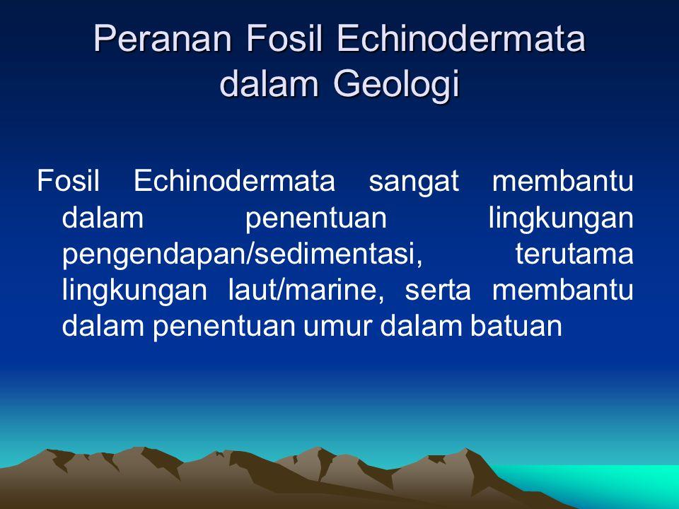 Peranan Fosil Echinodermata dalam Geologi