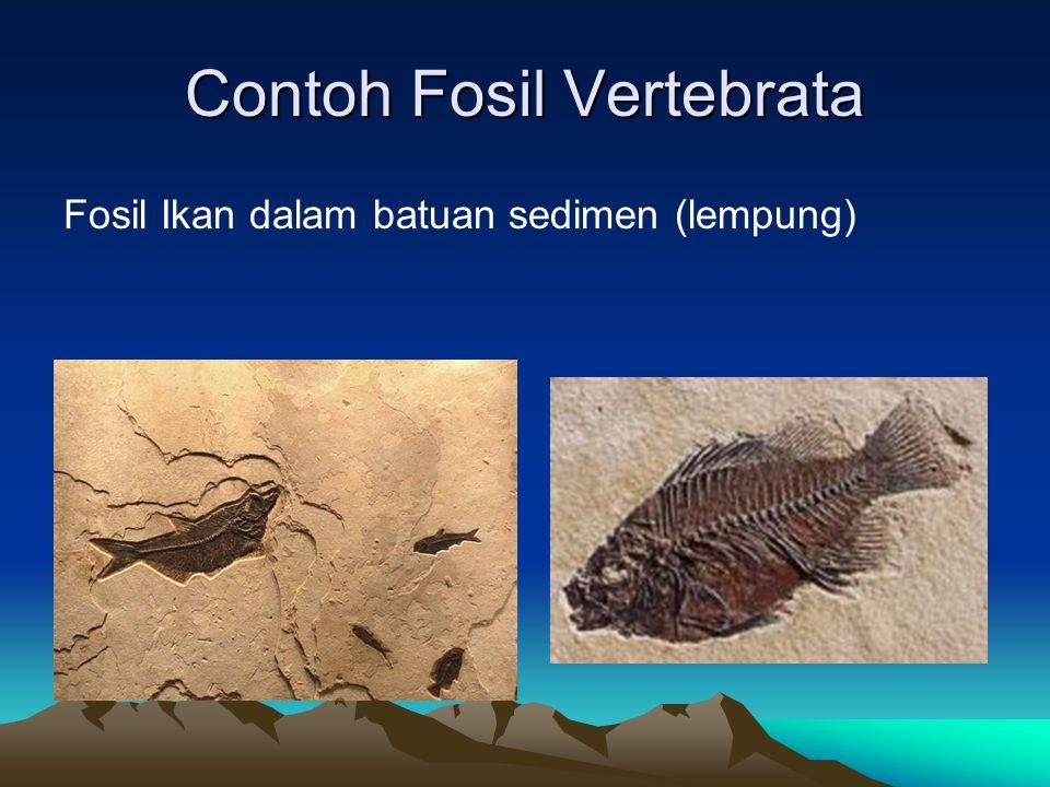Contoh Fosil Vertebrata