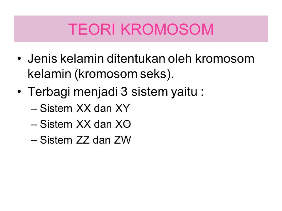 TEORI KROMOSOM Jenis kelamin ditentukan oleh kromosom kelamin (kromosom seks). Terbagi menjadi 3 sistem yaitu :