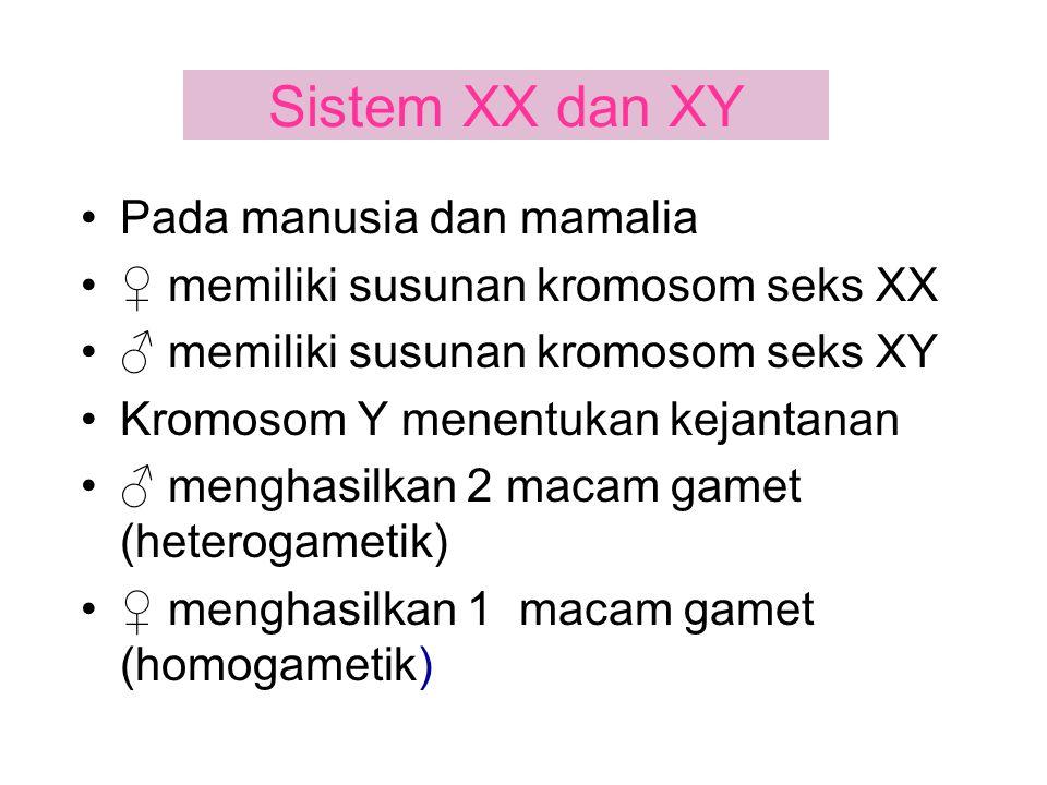 Sistem XX dan XY Pada manusia dan mamalia
