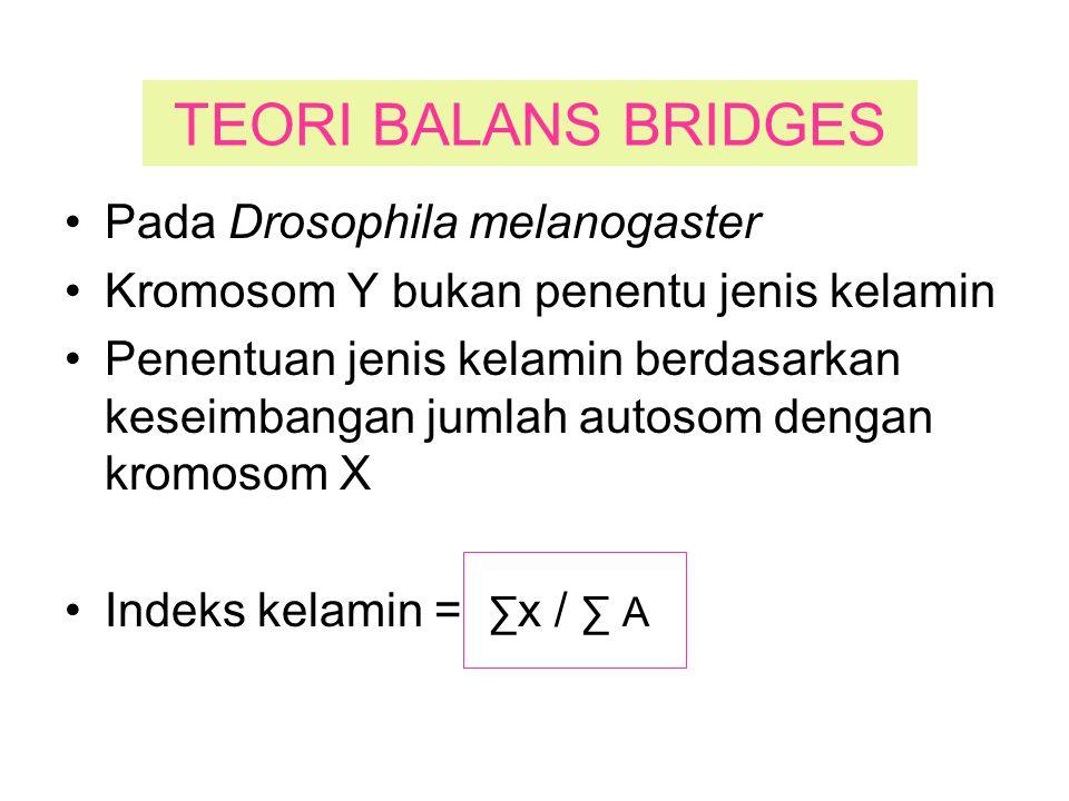TEORI BALANS BRIDGES Pada Drosophila melanogaster