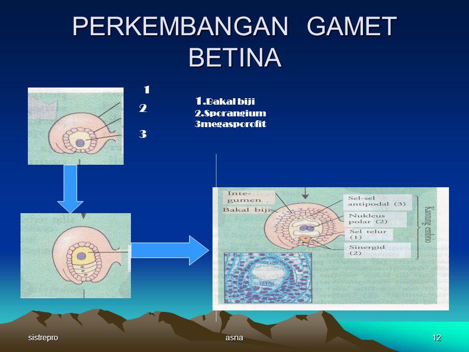 PERKEMBANGAN GAMET BETINA