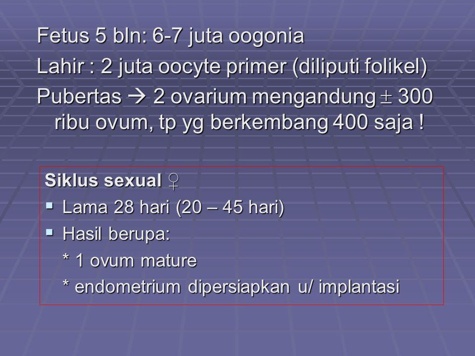 Fetus 5 bln: 6-7 juta oogonia